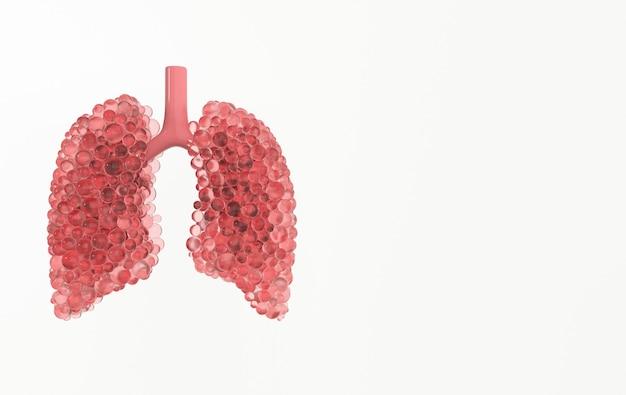 Концепция анатомии дыхательной системы человека
