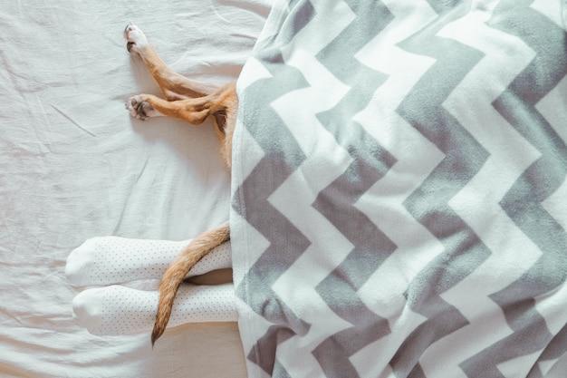 毛布から突き出ている人間と犬の足。