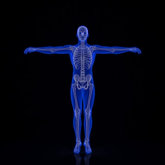 Human skeleton. 3d illustration. contains clipping path