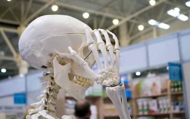 人間の骨格と人間の頭蓋骨のクローズアップのレイアウト