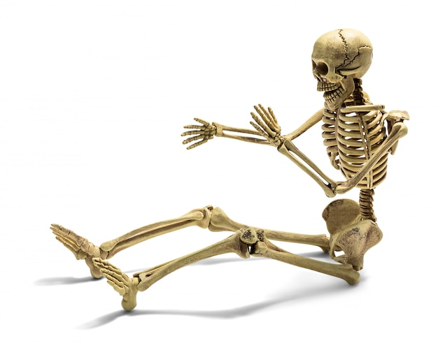 Human skeleton isolated
