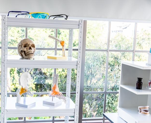 Human skull, foot, pelvis, and teeth model.