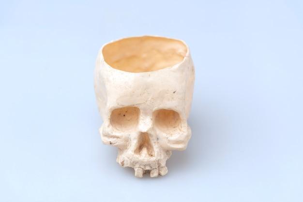 Human skull for halloween use