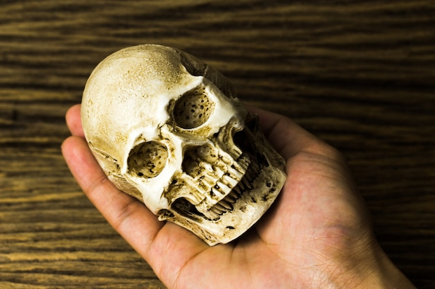 Human skull on hand with old wood background
