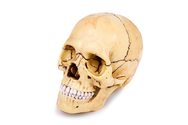 Голова человеческого черепа, изолированные на белом фоне