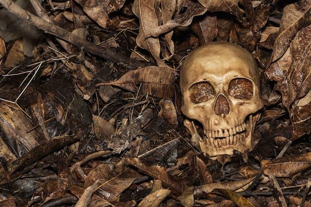 Human skull on leaf background.