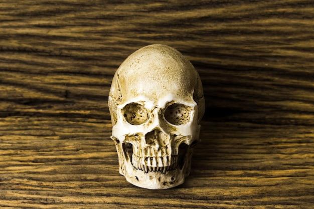 Human skull on old wood background