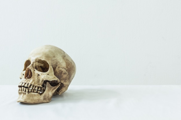 흰색 배경에 인간의 두개골