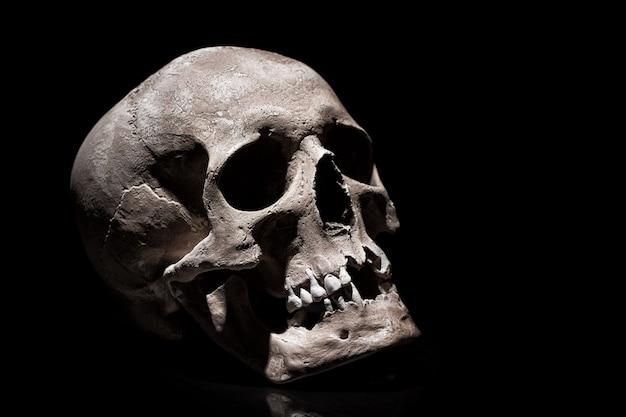 Человеческий череп на черном с отражением крупным планом
