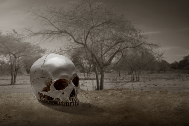 극적인 장면으로 지상에 인간의 두개골