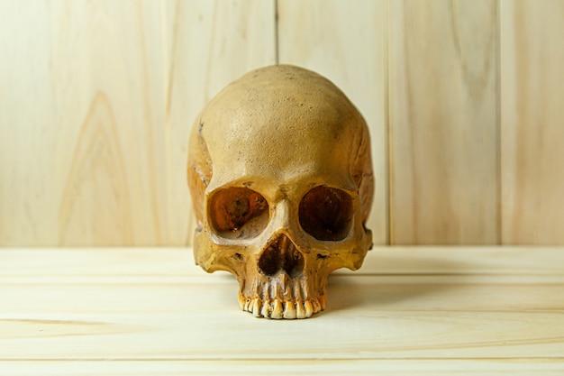 Человеческий череп на дереве для тела человека или содержания хэллоуина.