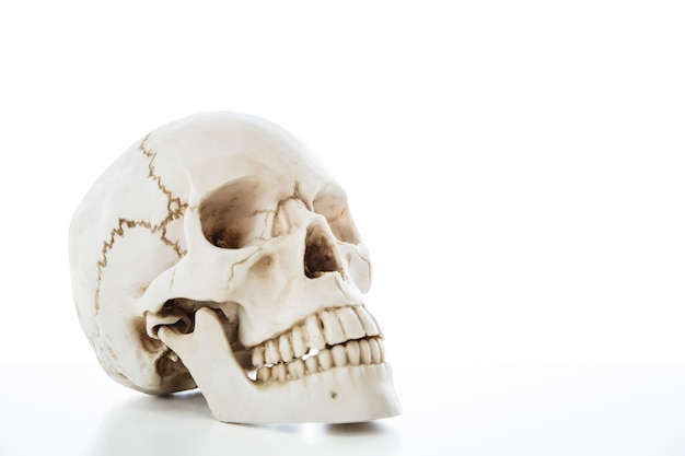 Human skull skeleton for medical anatomy education isolation on white background with clipping path.