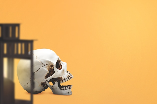 Human skull with a colored background