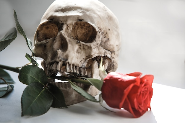 Human skull with a red rose