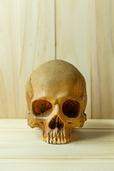 Human skull on wood for body human or halloween content.