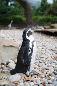 런던 동물원의 훔볼트 펭귄, 야생 동물