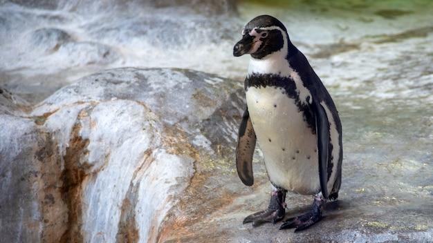 Humboldt Penguin Images | Free Vectors, Stock Photos & PSD