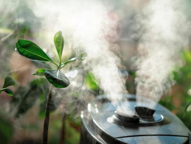 花の加湿器。自宅の窓にある空気加湿器、観葉植物への水蒸気の方向。