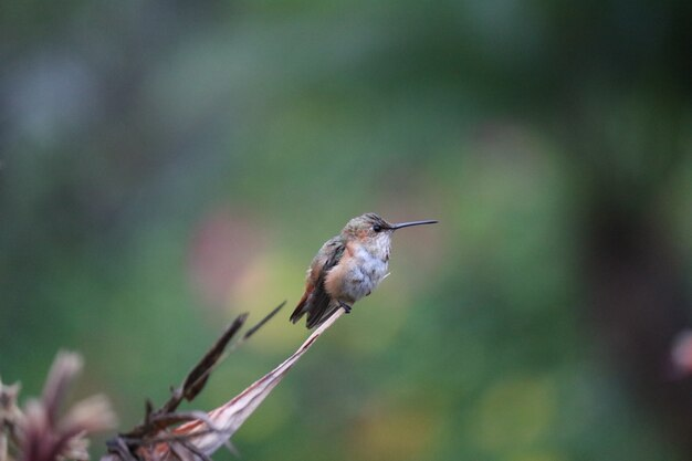Humming bird waiting
