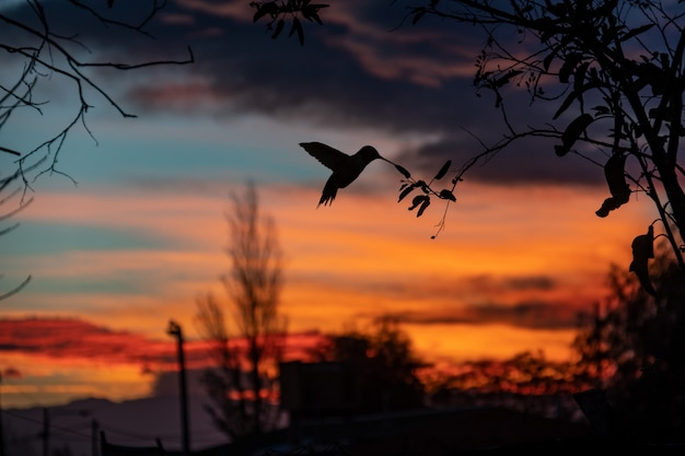 Hummingbird and a amazing sunset