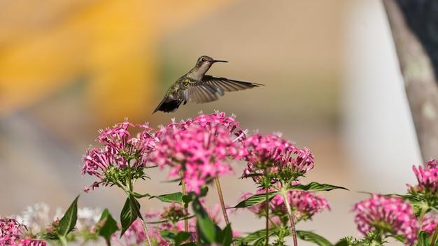 熱帯雨林の美しい紫とピンクの花の横に飛んでいるハチドリ