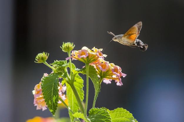 花の横に飛んでいるハチドリ
