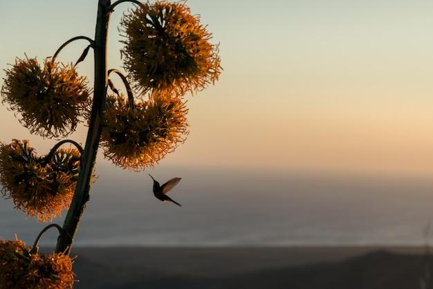 Колибри парит возле тропического цветка на закате