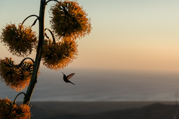 Hummingbird hovers near tropical flower at sunset