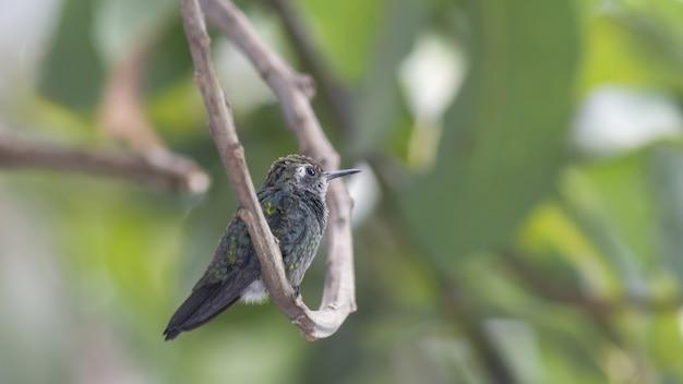 나뭇가지에 앉은 벌새