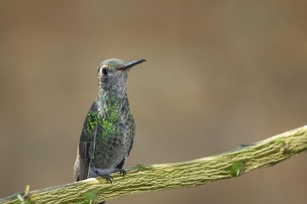 나뭇가지에 자리 잡은 벌새