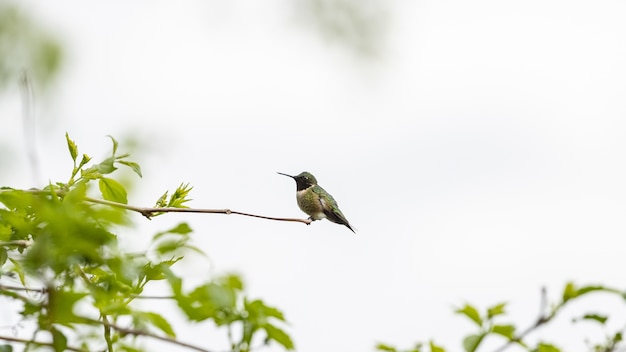 Hummingbird perched on a tree branch
