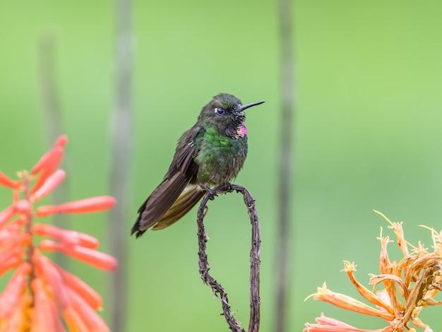 Hummingbird resting on a branch