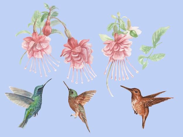 ハチドリとフクシアの花鳥水彩手描きイラスト