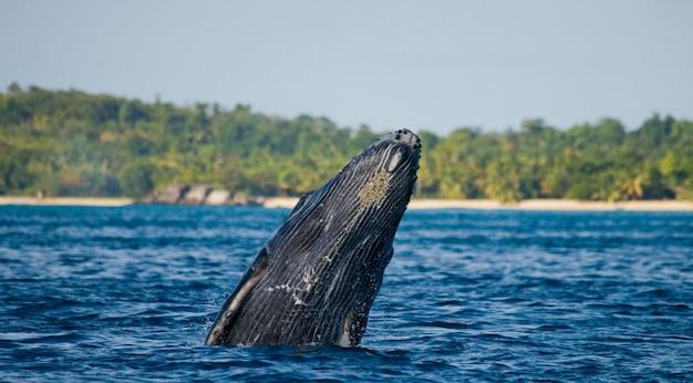 물 속에서 향유 고래