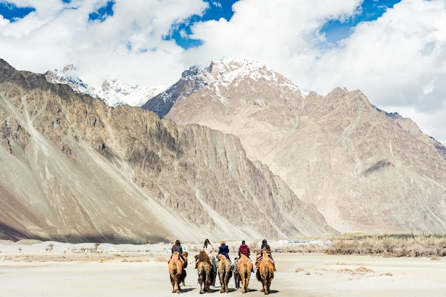 人々のグループはhunderの砂丘の上を歩くラクダに乗って楽しむ