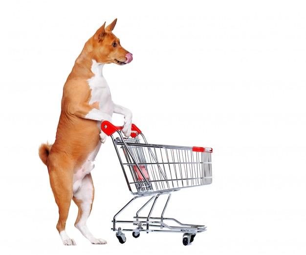 Голодная собака басенджи стоит на задних лапах и держит тележку для покупок