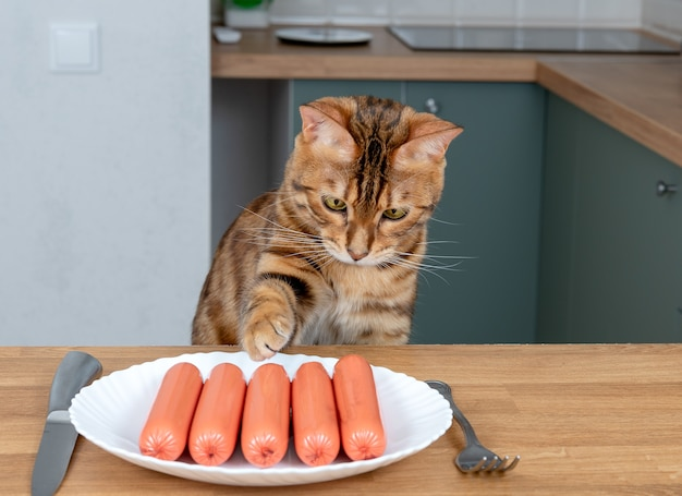 Hungry bengal cat steals sausages on wooden kitchen table