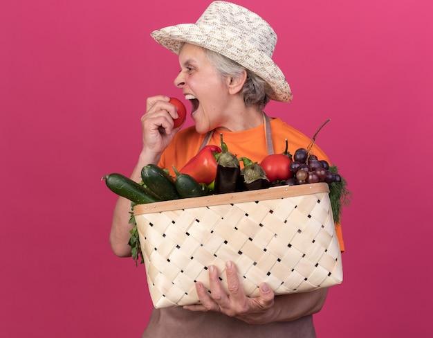 Giardiniere femminile anziano affamato che indossa cappello da giardinaggio che tiene cesto di verdure e finge di mordere il pomodoro isolato sulla parete rosa con spazio di copia