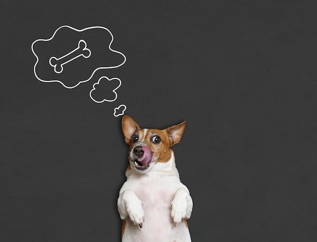 Голодный толстый пес лижет нос языком и мечтает о кости