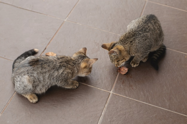 Hungry homeless kittens eat on the street