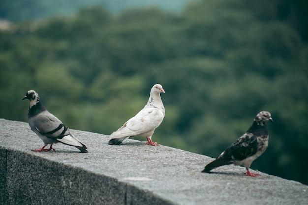 Голодный голубь на улице в городе