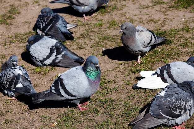 배고픈 비둘기