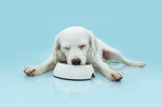 Голодный щенок ест еду в белой миске на синем