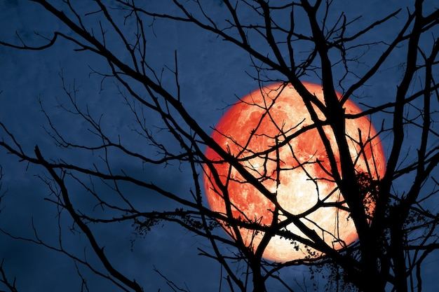 Hunter's moon floats on the sky in the shadow of the hands of dried branches and leaves in the forest
