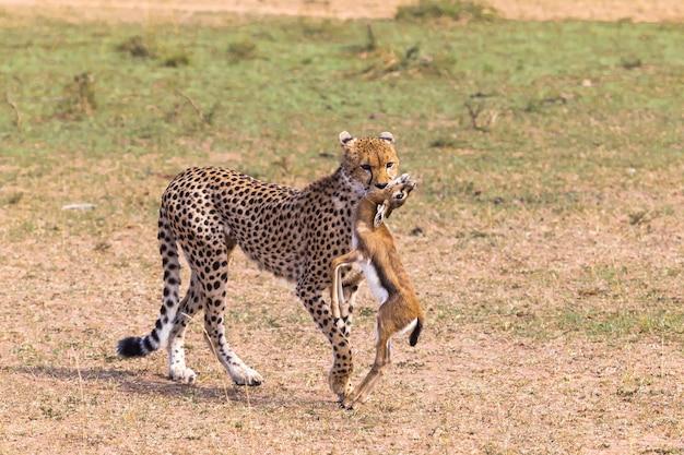 Охотники саванны гепард кения африка