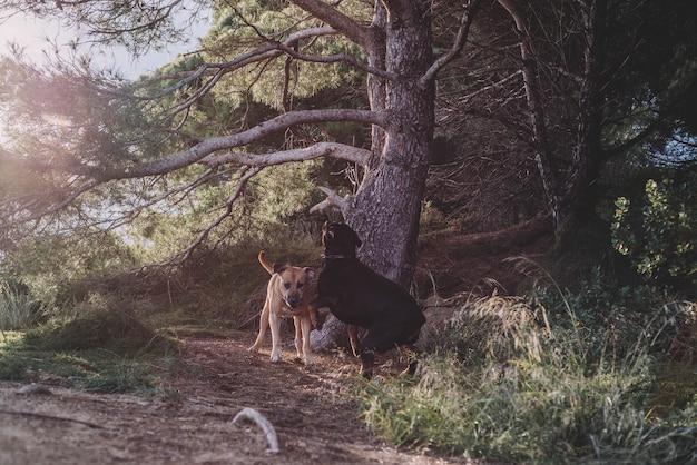 晴れた日に猟犬のカップル
