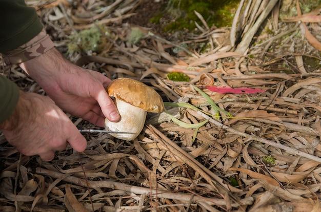 森の中で食用キノコを狩る