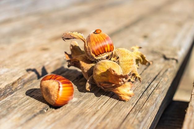 껍질을 벗기지 않은 헤이즐넛 잎. 헤이즐넛 껍질. 수확 개념입니다.