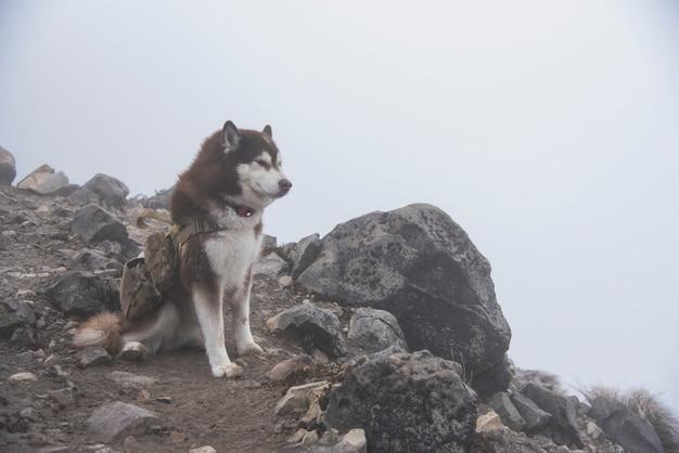 Хаски дог поход в горы невадо де колима национальный парк, на вершине горы над лесом