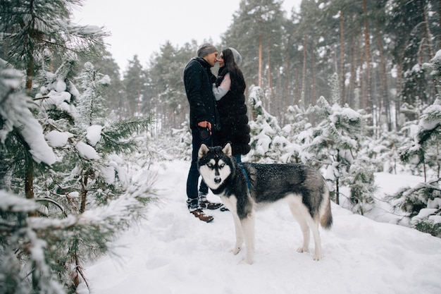 Husky dog and kissing couple in love walking in snowy winter forest in cold winter day